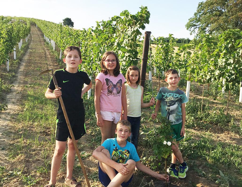 Die Kinder pflanzen Rosen im Weingarten